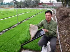 Cung cấp khay gieo mạ Phú Hòa An số lượng lớn giá rẻ