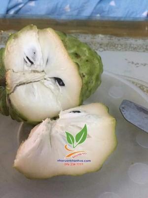 Na dứa Đài Loan ngon ngọt