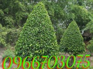 Cây xanh cây cảnh trang trí