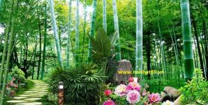 Gạch tranh 3d rừng tre xanh mát HP