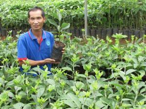 Vườn bơ 034 Dậu Loan - nơi giống bơ 034 được hình thành