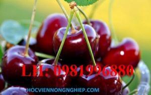 Cung cấp cây giống chery