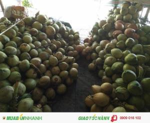 Chuyên cung Dừa khu vực Bình Dương