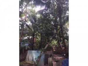 2019-11-14 15:08:40  4  1,4công nhà vườn ấp Cây Xanh,Thạnh Phú,Châu Thành,Tiền Giang 1,350,000,000