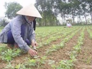2019-11-14 15:37:38  5 may-tria-dau-phong Kỹ thuật trồng cây đậu phộng 2,200,000