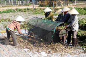 2019-11-14 15:37:38  4 may-tria-dau-phong Kỹ thuật trồng cây đậu phộng 2,200,000