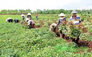 2019-11-14 15:37:38  7 may-tria-dau-phong Kỹ thuật trồng cây đậu phộng 2,200,000