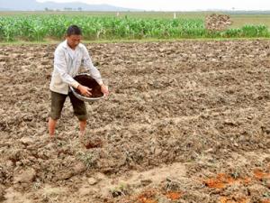 2019-11-14 15:37:38  9 may-tria-dau-phong Kỹ thuật trồng cây đậu phộng 2,200,000