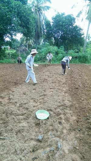 2019-11-14 15:37:38  16 may-tria-dau-phong Kỹ thuật trồng cây đậu phộng 2,200,000