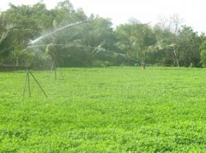 2019-11-14 15:37:38  12 may-tria-dau-phong Kỹ thuật trồng cây đậu phộng 2,200,000