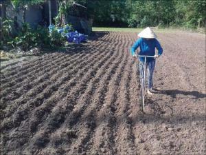 2019-11-14 15:37:38  10 may-tria-dau-phong Kỹ thuật trồng cây đậu phộng 2,200,000