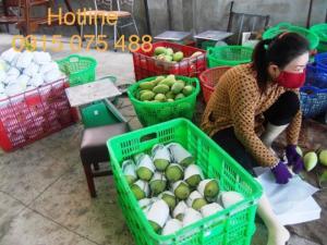Sột đựng trái cây 3T9 - khay nhựa 3T9 giá rẻ - 0915075488