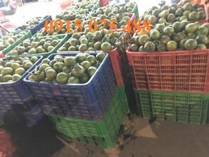 Sọt nhựa 3T9 - Rổ nhựa đựng trái cây giá rẻ - 0915075488