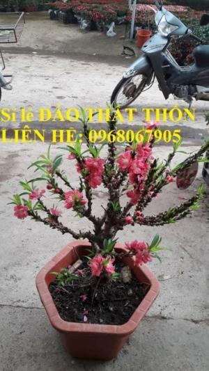 Sỉ - lẻ Đào Thất Thốn dáng bonsai cực chất - Liên hệ: 0968067905