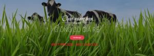 cung cấp giống cỏ chăn nuôi, cỏ cây cảnh, cỏ chống sạt lỡ uy tín nhất 0937955328