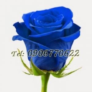 Hạt giống hoa hồng xanh – Bịch 10 hạt