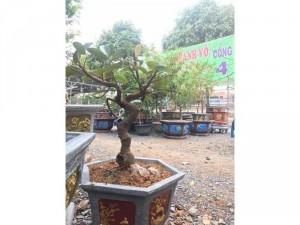 Mít bonsai hàng độc lạ chỉ có tại shop