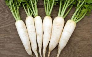 Hạt giống củ cải trắng Rạng Đông