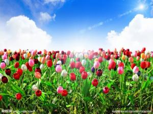 tranh 3d vườn hoa 3d - t34