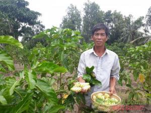 Quả này trước mọc hoang, cho không ai lấy, nay thế giới lùng mua có tại Việt
