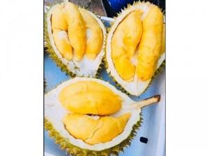 Sầu riêng cơm vàng hạt lép chín ăn liền