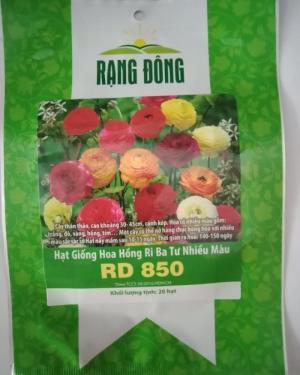 Hạt giống hoa hồng ri ba tư Rạng Đông