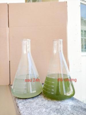 Men cắt tảo - làm sạch nước