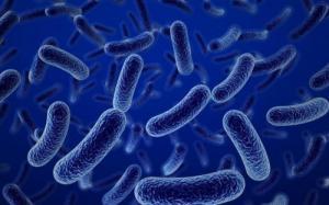 Cung cấp men Bacillus coagulans dạng nước