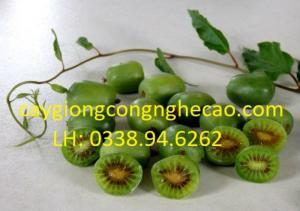 Cung cấp giống cây: Cây Kiwi