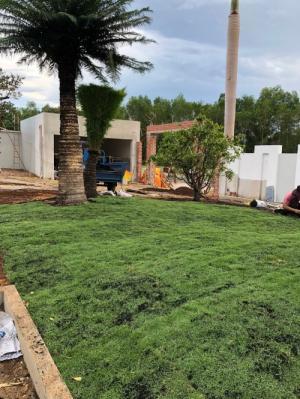 Trồng cỏ nhung Nhật sân vườn tiểu cảnh mini