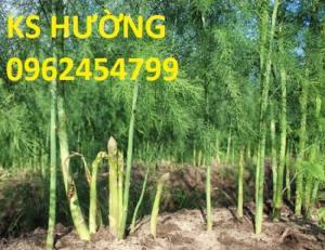 Chuyên cung cấp giống cây măng tây xanh và hạt măng tây xanh ,tím chất lượng
