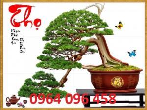 Tranh 3d cây tùng - gạch tranh 3d cây tùng