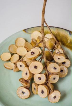 Cung cấp cây nhãn không hạt giống