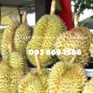 Sầu riêng Đạ Hoai  - sầu riêng  ri6 Vườn nhà trồng không thuốc thùng  10kg