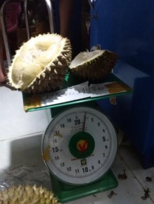 Sầu riêng rụng sầu riêng hạt truyền thống Vườn Nhà Dậu Lâm Đồng