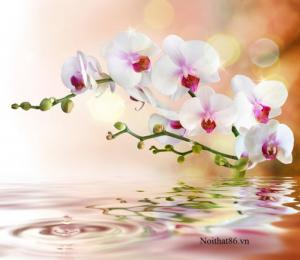 Tranh gạch hoa lan