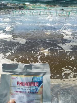 Tẩy nấm đồng tiền, nhớt bạt, cắt tảo: PHENOMIC