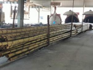 Mua cây trúc ở đâu tại HCM, địa chỉ mua tre trúc tại HCM, HỒ CHÍ MINH