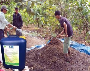 Chế phẩm sinh học EM ủ phân hữu cơ cho cây trồng