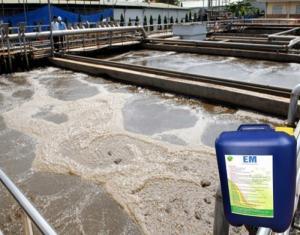 Chế phẩm EM gốc xử lý rác thải, bảo vệ môi trường