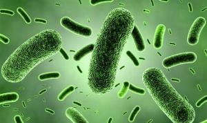 Cung cấp dung dịch men vi sinh Bacillus subtilis sản xuất