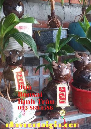 Dừa bonsai trâu đứng