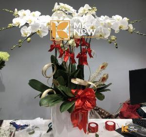 Lan hồ điệp Phú Quý - DHNK04