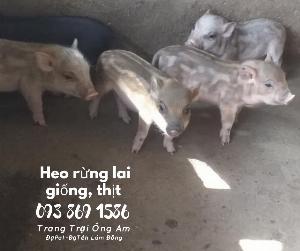 Bảng giá bán lợn rừng thịt, lợn rừng giống