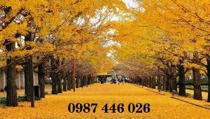 Tranh gạch men hàng cây lá vàng mùa thu HP6755