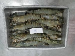 Tôm sú Minh phú mua 2 khay 15con gia ưu đãi sau