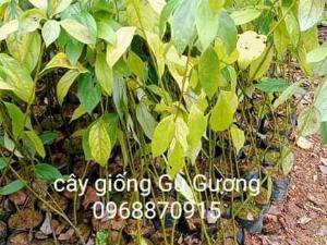 Vườn ươm cây giống đoàn Yến
