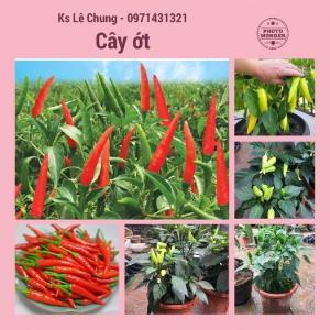 Chuyên cung cấp cây giống ớt trồng tại nhà