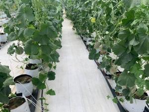 Bạt trải nông nghiệp,bạt phủ dưới đất, bạt địa nông nghiệp tại Hà Nội, bạt địa dùng cho nhà kính nhà lưới