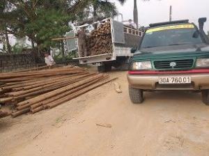 Vựa tre Sài Gòn - Buôn bán cung cấp các chủng loại cây tre
